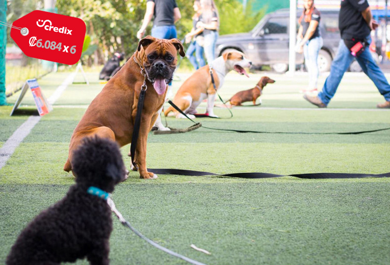 Federación, Canina, Costa, Rica, ACAN, clases, grupales, adiestramiento, canino,