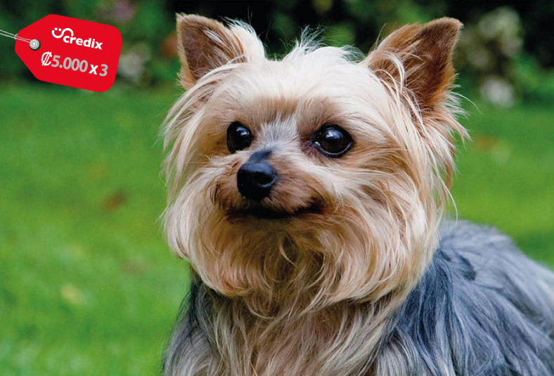 Federación, Canina, Costa, Rica, ACAN, registro, canino, perro, identidad, app