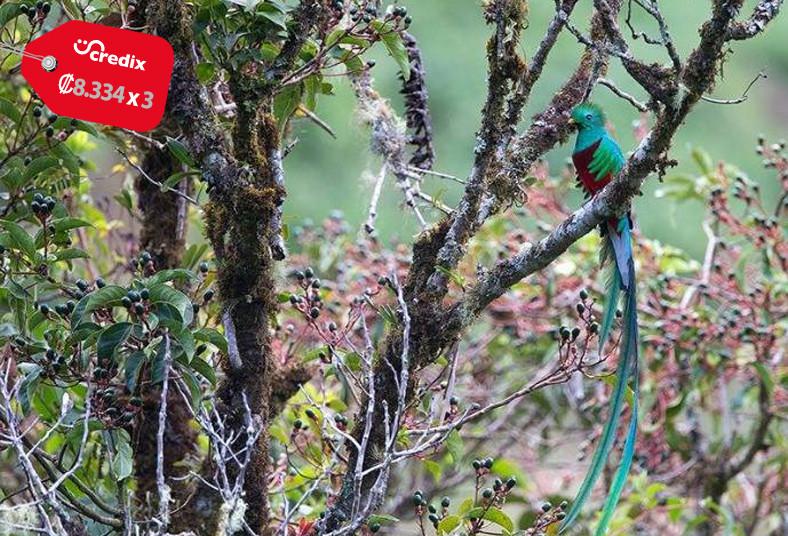 iyok, ami, guarco, naturaleza, quetzal, catarata, senderos, pareja, reserva,