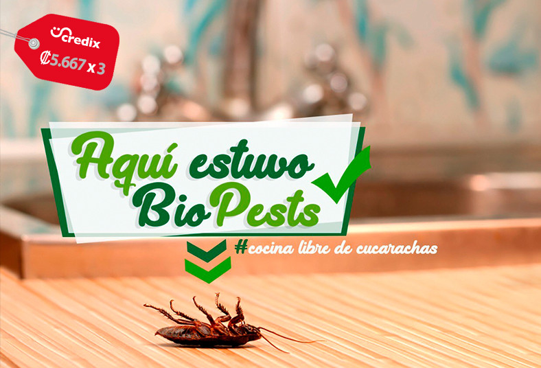 BioPest CR, fumigación, interna, externa, plagas, dengue, zika, roedores, babosa
