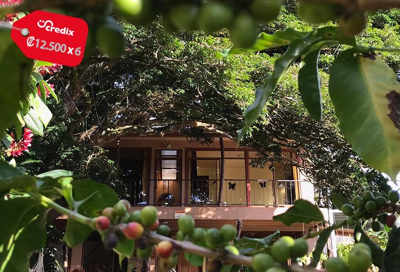 casa, mariposa, monteverde, naturaleza, amigos, familia, electrodomésticos,