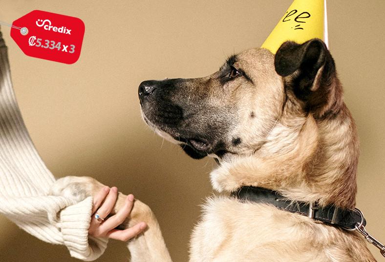 Centro, Estético, Salud, Animal, VB, adiestramiento, básico, perro, chequeo,