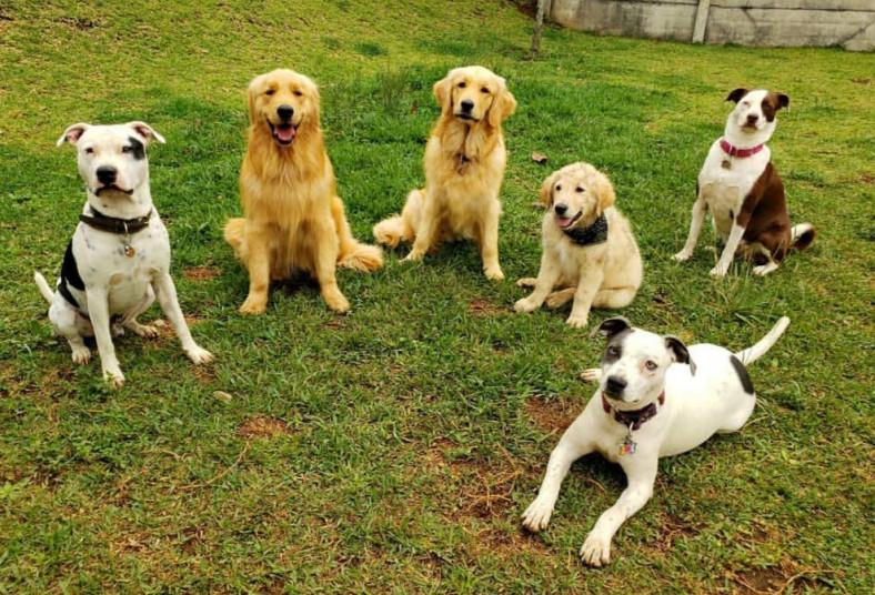 Hotel, DogLand, guardería, canina, perro, sociable, vacunado, cuidado, personal