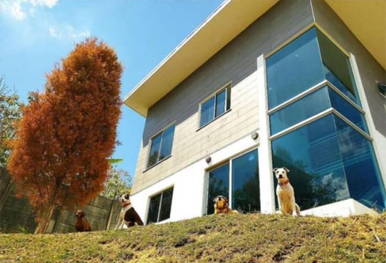 Hotel, DogLand, hotel, canina, perro, sociable, vacunado, cuidado, personal