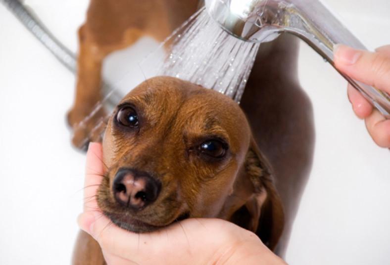 Dog Grooming In Miami Fl