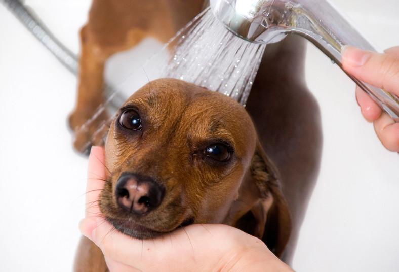 Clínica, Mascota, Barva, grooming, corte, pelo, keratina, pipeta, pulgas, diente