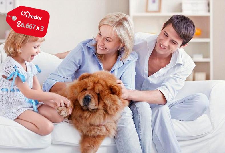 d&n, clean, servicio, limpieza, profunda, tapicería, cuero, tela, hogar, plazas,