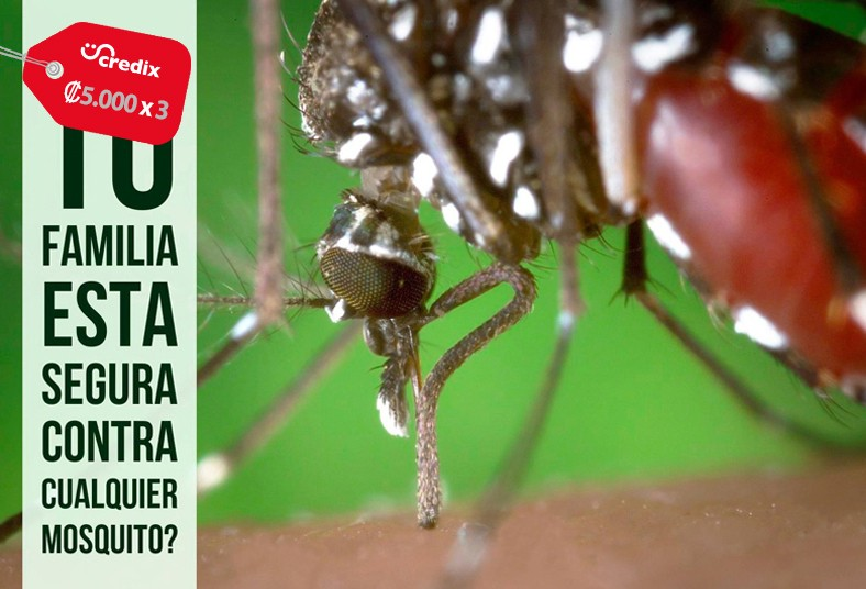 ecoplag, costa rica, fumigación, plagas, termitas, casas, locales, roedores