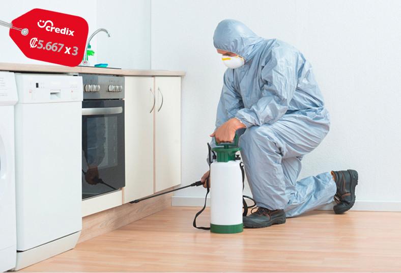 fumigadora, eco, ambiental, servicio, fumigación, hormigas, moscas, hogar, local