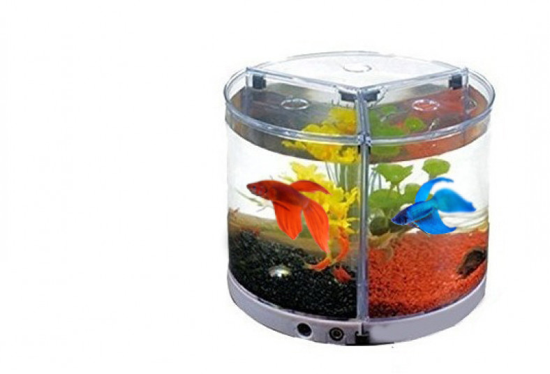 Acuario, Fish, Center, G&R, pez, betta, splender, pecera, mini, tank, planta,