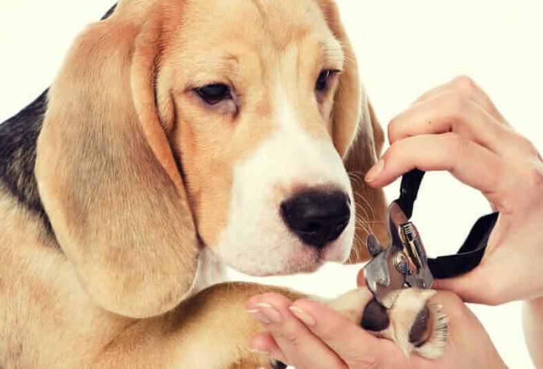 Huellitas, Style, Grooming, baño, secado, peinado, uñas, oídos, perfumado, perro