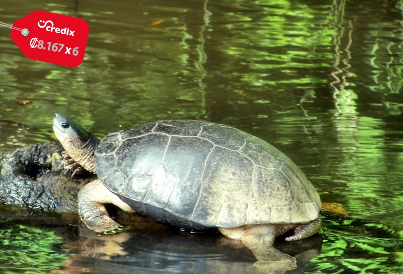 ILAN, ILAN, Trails, Lodge, tortuguero, sendero, naturaleza, animales, descanso,