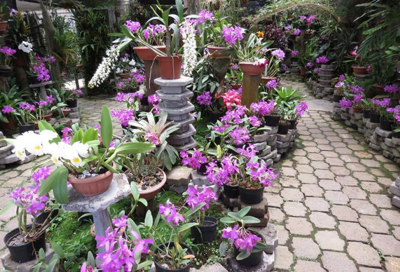 jardín, botánico, lankester, visita, jardín japonés, bosque, niños, adultos,