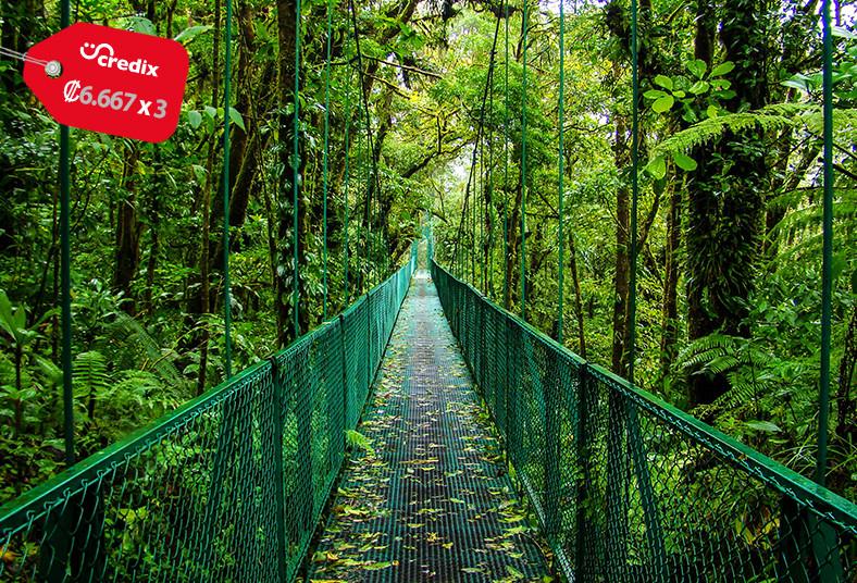 Cabinas, Ardillas, Monteverde, hospedaje, desayuno, familia, pareja, naturaleza
