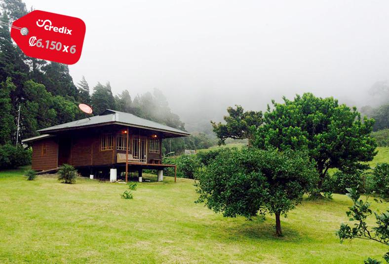 Lemon, House, Monteverde, habitación, cocina, equipada, naturaleza, pareja,