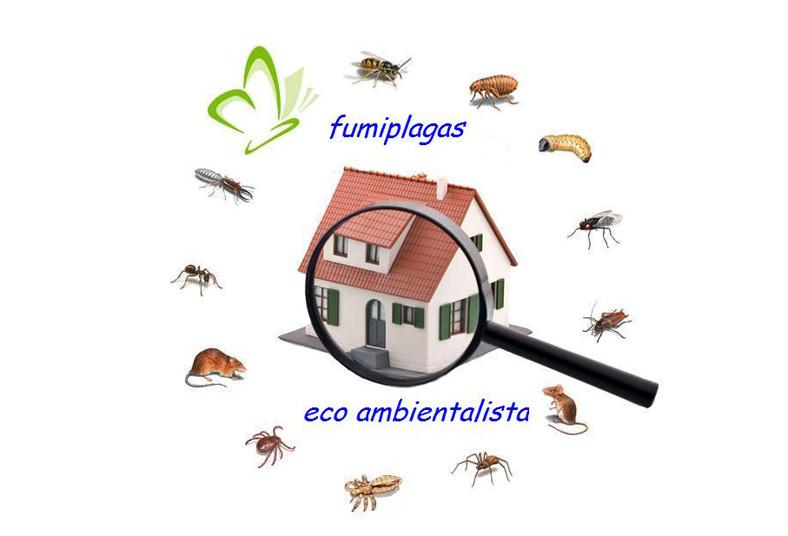 fumiplagas, eco, ambientalista, eliminación, fumigación, casa, plagas, productos