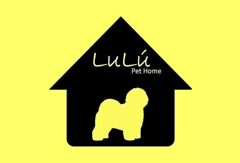 Lulú, Pet, Home, curso, adiestramiento, canino, sentarse, acostarse, domicilio