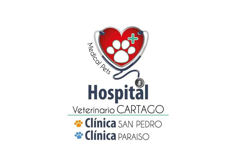 Veterinaria, Medical, grooming, gatos, perros, limpieza, baño, oídos, cuidado,