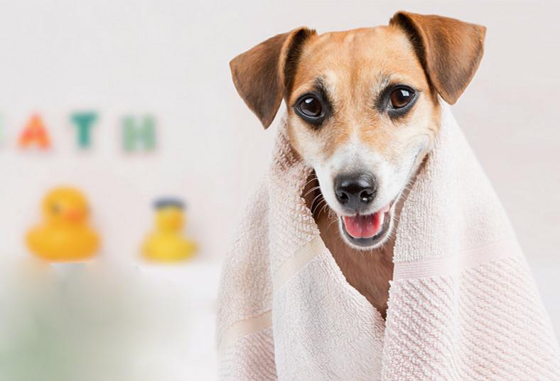 veterinaria, mis, mascotas, grooming, gatos, perros, limpieza, baño, oídos,
