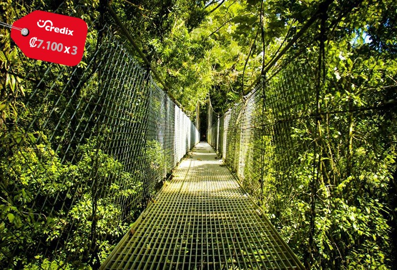 Mistico, Arenal, Hanging, Bridges, Park, spider, monkey, canyon, rappel, swing