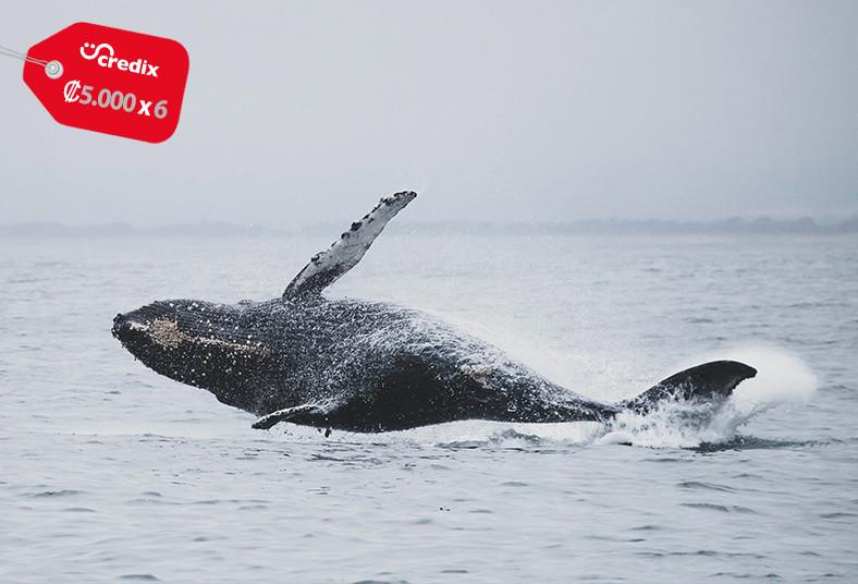 Perla, Costa, Rica, Tours, isla, tortuga, guayabos, ballenas, delfines, frutas,