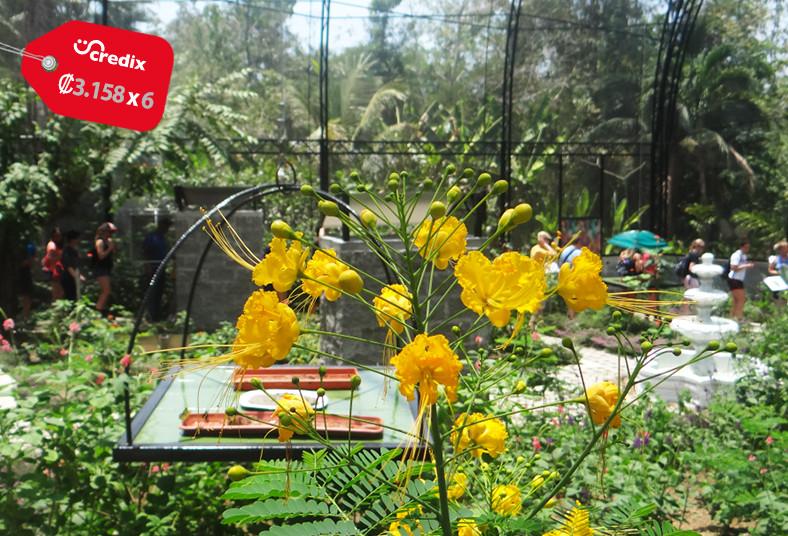 Rainforest, Adventures, teleférico, mariposario, jardín, plantas, medicinales,