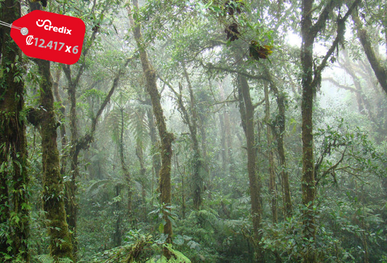 SinwaTourDreams, Monteverde, Express, Shuttle, tour, puentes, colgantes, póliza,