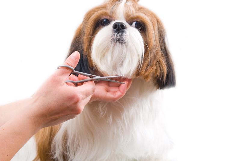 super, mascotas, grooming, perros, shampoo, limpieza, dental, pedicura, corte,
