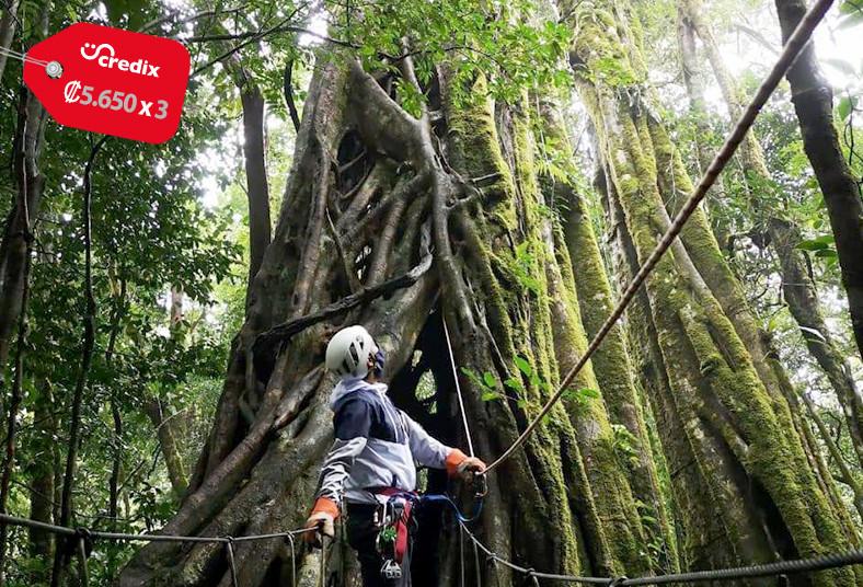 Original, Canopy, tour, rappel, escalada, tarzan, swing, árbol, aventura