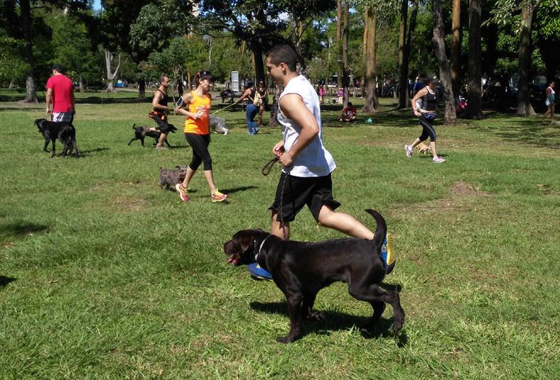 escuela, adiestramiento, formación, k-9, valle, perro, mascota, ordenes, correa